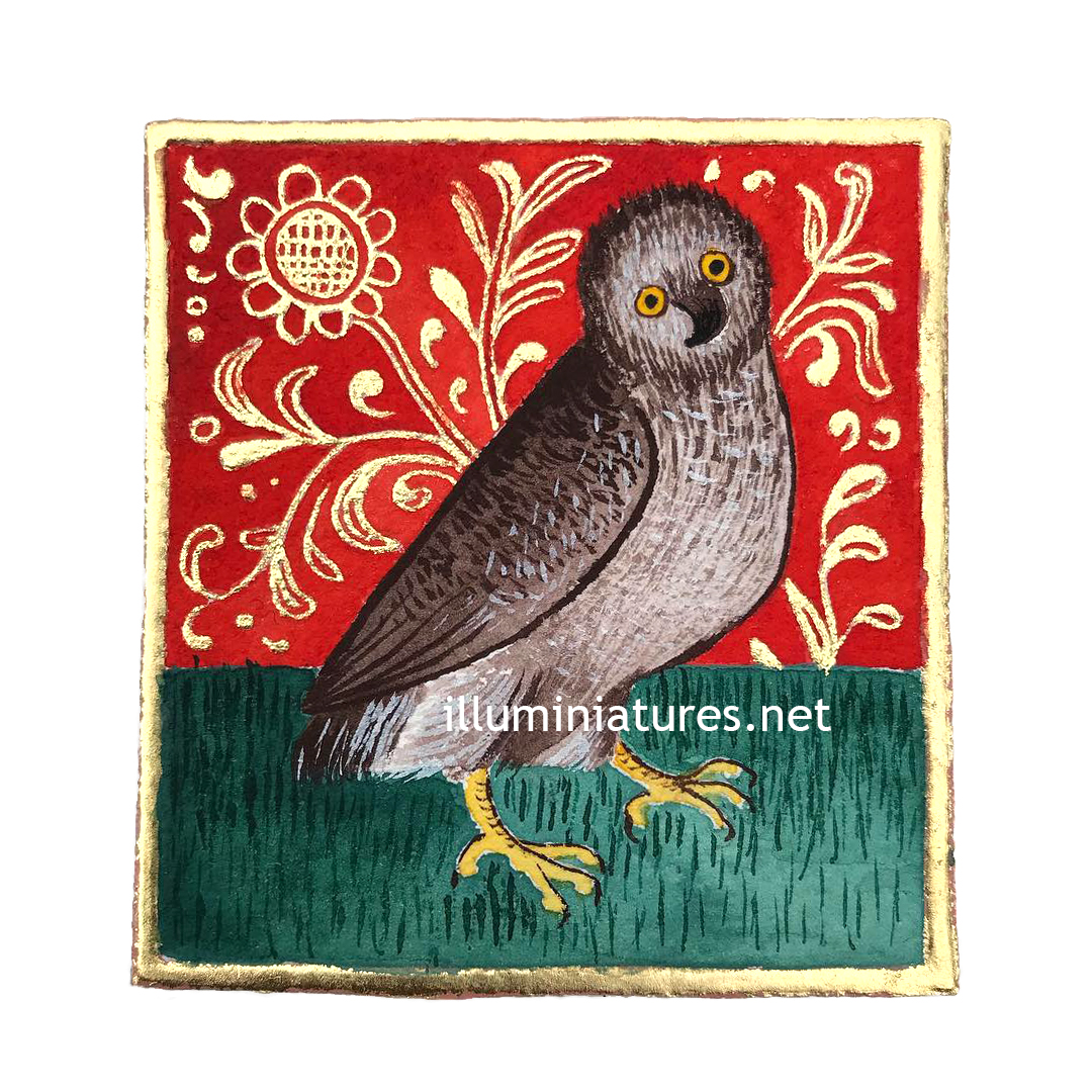 An owl / Une chouette