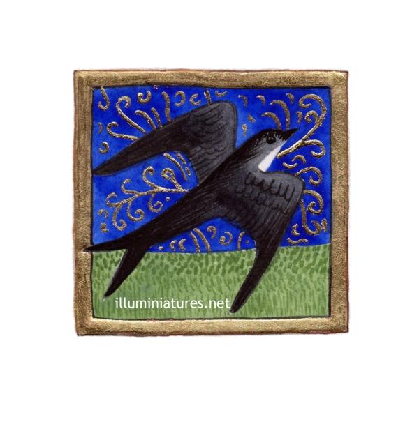 Illuminated swallow / Hirondelle enluminée